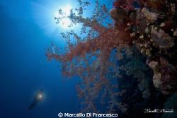 Soft coral at Saint john reef during a mornig dive. by Marcello Di Francesco