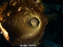 Moray Eel by Alex Thomas