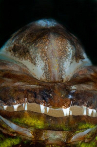 Alien (an inverted close up image of a Cardinal Fish). by Paul Colley