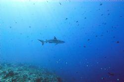 Nikon D-100 with wide angle. Blue Corner, Palau, Micronesia by Catherine Landa