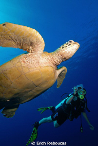 Turtle and photographer in Sipadan by Erich Reboucas