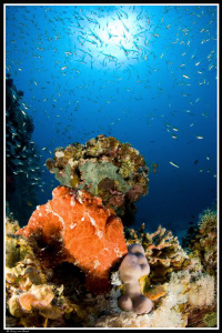 Frogfish in the sun... by Dray Van Beeck