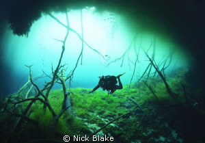 A dive in Car Wash cenote, Yucatan, Mexico. by Nick Blake