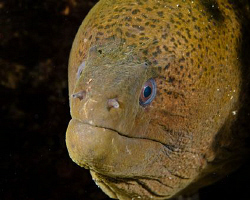 old man Moray. canon G10 by Andrew Macleod