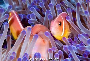 On guard.   Fiji. by Larissa Roorda