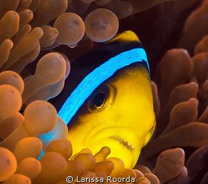 Cautious_Fiji. by Larissa Roorda