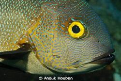 Bright eye ! by Anouk Houben