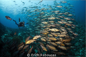 Snappers and diver by Erich Reboucas