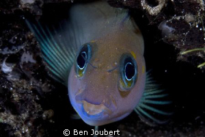 Found this colorful guy in a dead log, so he was pretty e... by Ben Joubert