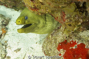 Whatever you're selling, I don't want any.  Huge green Mo... by Stuart Spechler