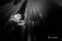 Rest by Gonzalo Perez