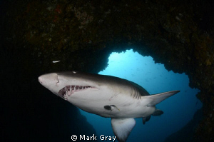 GNS in the Cod Hole part II by Mark Gray