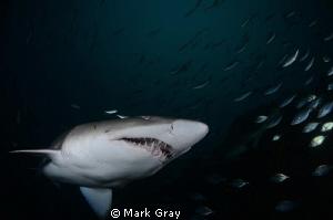Clean Teeth by Mark Gray