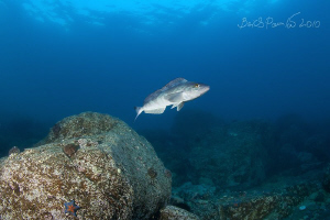 arabesque greenling EF 15mm f/2,8 Fisheye by Boris Pamikov