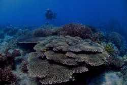 This place was spared by massive coral bleaching from las... by Bernard Maglana
