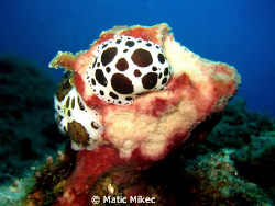 snail Dalmatian by Matic Mikec