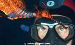 Eye to Eye with Dragon / A diver was astonished by the co... by Richard (qingran) Meng