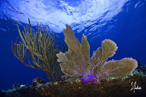 This image was taken during a dive at the Sugar Wreck nea... by Steven Anderson