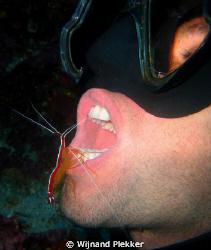 Fresh shrimp by Wijnand Plekker