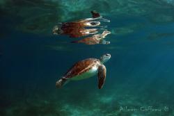 Turtlelight ... Akumal Bay by Aileen Caffrey