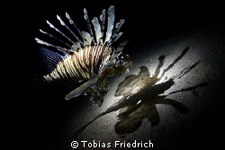 Lionfish and it's shaddow. by Tobias Friedrich