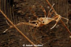 Balancing crab. by Anouk Houben
