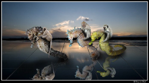 Seahorses at the racetrack... by Dray Van Beeck