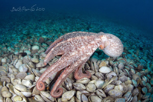 """""""Is there anyone alive? I'm hungry"""" / octopus at graveya... by Boris Pamikov"""