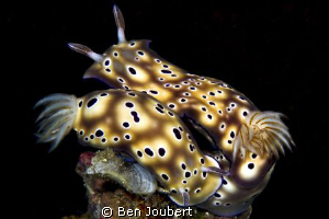 "Valentines Day for Nudi's, I guess. Saw a numerous ""coupl... by Ben Joubert"