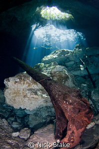 Tree trunks and sunbeams, Taj Maha Cenote, Mexico. by Nick Blake