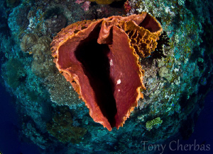 Looking Down the Barrel of a Sponge by Tony Cherbas