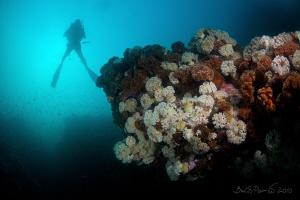 Reefs of sea of japan by Boris Pamikov