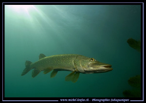 Pike Fish having a rest... :O).. by Michel Lonfat