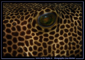 The Eye of a Pufferfish... ;O)... by Michel Lonfat