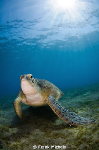 Sun Prayer This Realy Wonderfull Turtle i Discovered at ... by Frank Michels