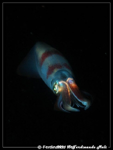 A very fast squid escape in the night. by Ferdinando Meli