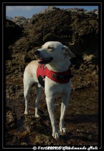 "My dear safety dog ""Lucky"". by Ferdinando Meli"