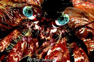 Blue Eyes by Ben Joubert