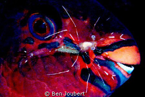 At first, when I took the shot, I thought the two shrimp ... by Ben Joubert