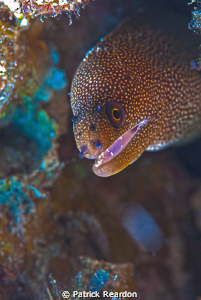Backlit shot of an eel.  Got a lot of light through the m... by Patrick Reardon