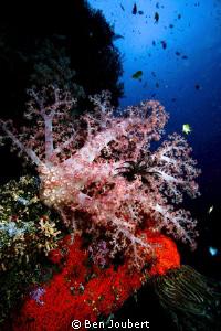 Colourful Reef by Ben Joubert