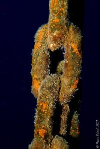 Marine chain.... by Marco Faimali