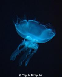 Jellyfish...captured at Phuket, Thailand by Teguh Tirtaputra