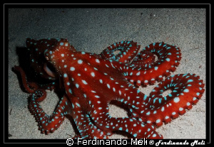 Octopus in the night. by Ferdinando Meli