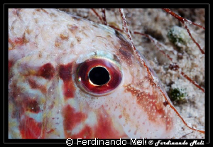 A fish sleep in the night. by Ferdinando Meli