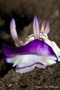 Nudi with my lens berried to get down low. by Graeme Cole