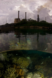 Coral Garden in Front of a Power Plant by Tony Cherbas