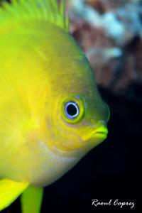 Hello yellow ! by Raoul Caprez
