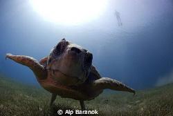 Taken with 10,5 mm with 2 Sea&Sea YS 110 strobe @ Antalya... by Alp Baranok