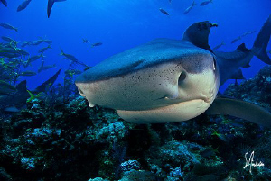 On our last shark trip we visited a reef which I had neve... by Steven Anderson